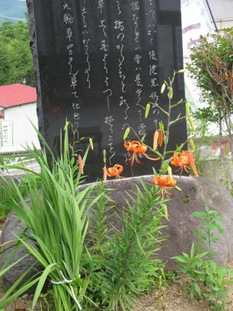 IMG_2689百合